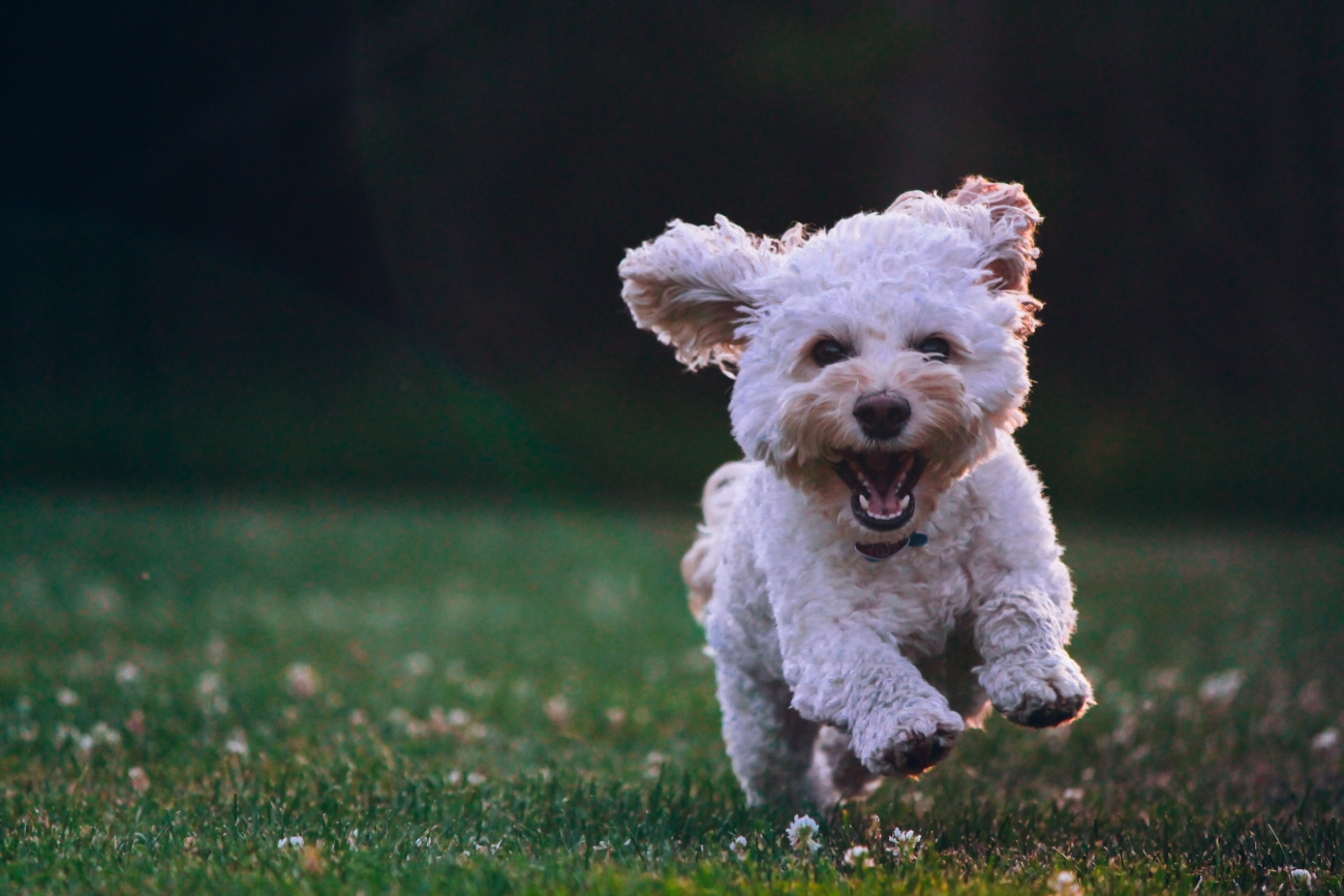 pets and independent senior living