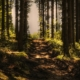 wooded trail | community in cumberland maine