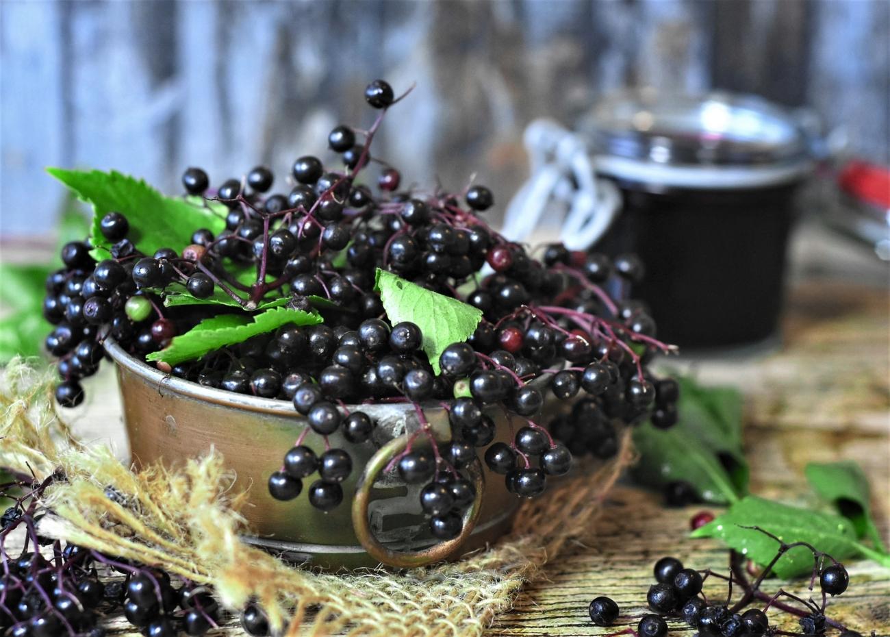 elderberry to boost immunity