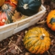 gardening essentials for fall