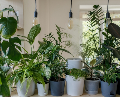 best indoor house plants for health