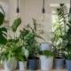best indoor house plants for health
