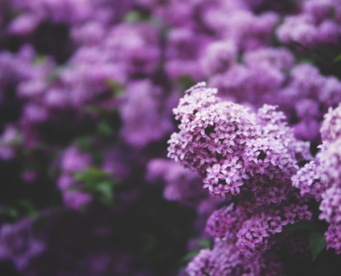Gardening 101: When Is It Too Late to Plant Flowers?