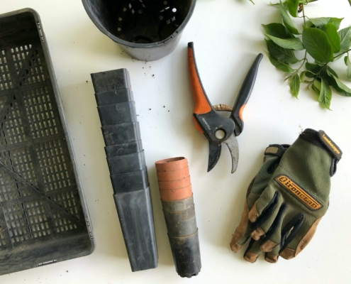 late summer gardening tips